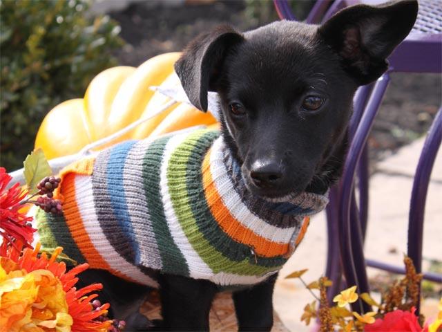 Herbsttrend: Pullover Patchwork