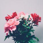 Blumen für eure Wohnung! Blumensaison 2017